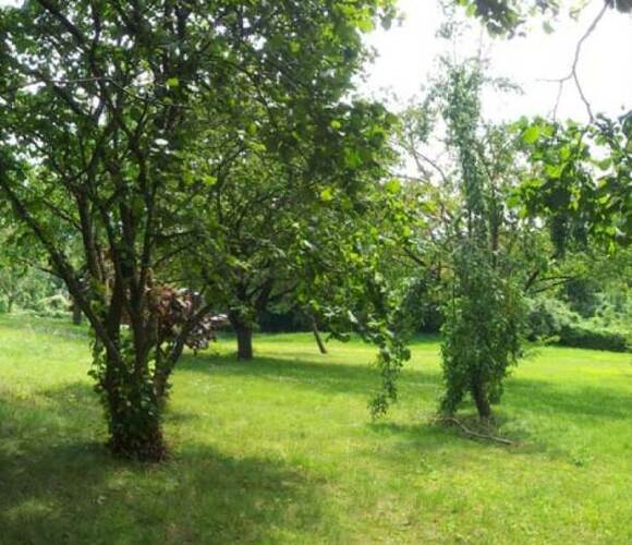 Vente Terrain 984m² Vigny (95450) - photo
